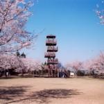 城山公園(一宇治城跡)|日置市観光協会